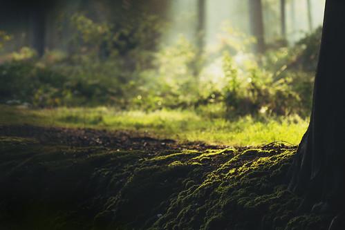 Magic nature (Explore #4, 09.09.2012) (Mathijs Delva) morning light sunlight green nature wet misty forest sunrise early woods woodlands mood fresh rays sunrays lightrays moist projecting 100mmf28macro