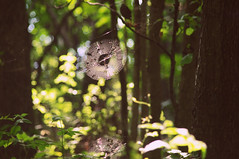 Untitled (Leigh Anne Brader) Tags: life trees light sunset plants green forest insect spider woods bokeh web spiderweb bark