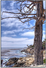Eternal... (scrapping61) Tags: california nature feast coast expression 17miledrive openspace legacy littleprince tistheseason ourtime swp 2011 sirhenry vividimagination rockpaper musicphoto scrapping61 awardtree covertpainters internationalphoto showthebest daarklands trolledproud pastfeaturedwinner exoticimage pinnaclephotography poeexcellence vividnation digitalartscene