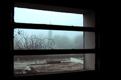 Ventana... frondosa siempre (Kuatsu !) Tags: trees window fog ventana rboles neblina niebla
