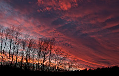 Pink Cloud Sunset (tumultuouswoman) Tags: pink sky black color tree nature silhouette spring colorful bare branches dramatic bold