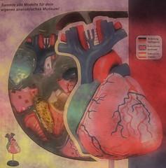 Apple of Paradise - Heart - Hommage a Friedemann der Teppichweber (hedbavny) Tags: vienna wien stilllife art museum tomato austria sterreich stillleben 3d paradise outsiderart heart decay assemblage kunst stilleben shangrila puzzle human mementomori concept dried mold weaver transition decomposition herz modell tomate nhm weber konzept tapestry vanitas conceptualart naturhistorischesmuseum vergnglichkeit anatomie paradies narrenturm traum tapisserie schimmel verfall unendlich naturezamorta endlos friedemann verwandlung endlessness vertrocknet getrocknet menschlich konzeptkunst weben schimmelpilz museumsshop paradiesapfel paradeiser aktionismus solanumlycopersicum sammlerstck eingetrocknet appleofparadise dehumidified friedemann1 friedemannderteppichweber naturhistorischesmuseumderstadtwien anatomiemodell anatomischesmodell hedbavny friedemannhoflehner ingridhedbavny