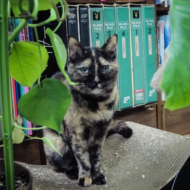 Today's Cat@2012-09-23
