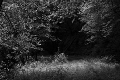 On my way to...  / En mi camino a... (Yoli in Wonderland) Tags: bosque forest dark mysterious path camino way sendero frondoso monocromo monochrome arbol tree wood