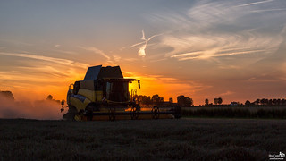 Harvest @ Sunset
