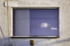 London_DSC7805F (JPPimenta) Tags: the window bird clouds art artistic street photography