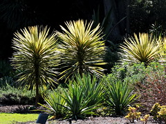 Royal Botanic Gardens in a Melbourne winter (set of 12) (Lesley A Butler) Tags: victoria royalbotanicgardens nature melbourne landscape garden australia