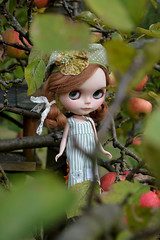 Poppy in the apple tree