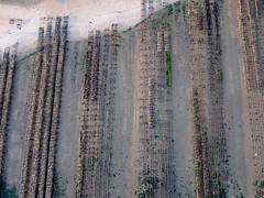 Parc  hutres de l'le Madame en Charente-Maritime (Olivier Guilmin) Tags: charentemaritime france guilmin island kap kiteaerialphotography madame olivier httpolivierguilminweeblycom ile