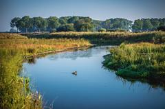 Kanaalpark (Ingeborg Ruyken) Tags: 2016 500pxs empel kanaalpark rosmalenseaa dropbox duck eend flickr morning natuurfotografie ochtend river rivier september summer sunrise zomer zonsopkomst