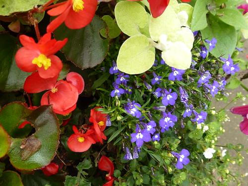 Summer Flowers !