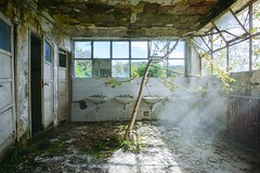 The escape dream of a tree (www.nicolabertellotti.com) Tags: urbex decay decadenza abbandono abbandonato abbandonata abandoned tree albero escape fuga sogno dream forgotten room bath