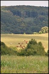 Nature (Beata*) Tags: hungary nature landscape animal