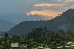 _DSC3970_Bali_09_16 (Saverio_Domanico) Tags: bali indonsie munduk voyage