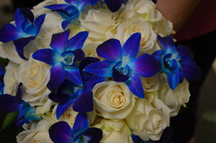 Blue Orchids (Monday Morning Flower and Balloon Co) Tags: blue blueflowers bridalbouquet whiteroses blueorchids weddingbouquet blueandwhitewedding august112012