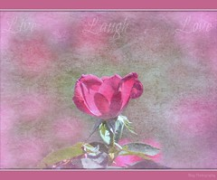 Live ~ Laugh ~ Love ( ~ ~ Sharon ~~ ) Tags: summer texture love rose live laugh  hardlight