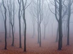 Tandlewood (Wayland.) Tags: mist landscapephotographeroftheyear tandlewood
