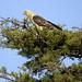 Un bel uccello verso Leticia