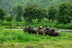 (Nathan A Rodgers) Tags: mountain elephant mountains nature animal fauna forest landscape thailand landscapes hill hills countries jungle thai elephants forests kanchanaburi 2012 mahout sangkhlaburi sanghklaburi mahouts kanchanaburiprovince tenasserimhills tenasserimrange thiokhaotanaosi