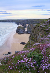 Late Afternoon Pinks (Twogiantscoops) Tags: seascape landscape coast cornwall bedruthan seathrift seapink bedruthansteps iplymouth twogiantscoops