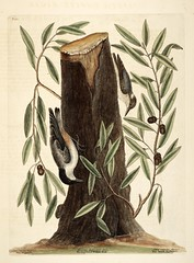 Anglų lietuvių žodynas. Žodis bluejack oak reiškia bluejack ąžuolas lietuviškai.