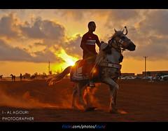 Knight Benghazi ( [ Libya Photographer ]) Tags: sport nikon libya benghazi   alahli   d80 alahly