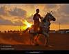 Knight Benghazi (العقوري [ Libya Photographer ]) Tags: sport nikon libya benghazi فارس جواد alahli حصان خيل d80 alahly خير احصنه خيول فرسان