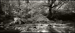 Island in the Stream (Regular Rod) Tags: light shadow summer blackandwhite panorama 120 film nature river dark found holga woods day shadows secret derbyshire peakdistrict forgotten ilfordfp4 naturesfinest dixactol holgaheads ysplix theunforgettablepictures theperfectphotographer natureselegantshots