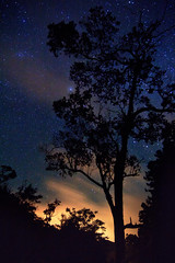 Night in the Forest (Emily Miller Kauai) Tags: park trees sky mountains west night forest stars hawaii state side silhouettes kauai kokee top12