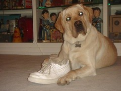 Hercules claims he has no idea who ate the shoe He