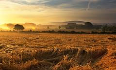 Golden Fields (Natasha Bridges) Tags: mist sunrise countryside shropshire fields wrekin goldenfields