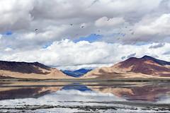 Kar lake (Nattachai Sesaud) Tags: sky india mountain lake reflection bird nature horizontal outdoors photography dawn nopeople panoramic lakeshore watersedge scenics tranquilscene traveldestinations colorimage beautyinnature nonurbanscene lehmonastery