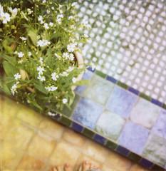 . (SusannahConway) Tags: polaroid sx70 600 marrakesh