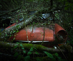 ... (Zen Roxy) Tags: tree abandoned nature leaves car rust decay rusty hidden oldcar corrode bstns