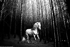 when light ceases to exist (The memory of tree) Tags: lighting light horse white black tree luz landscape caballo arboles paisaje magical magico marcosanmartin