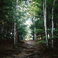 .path (b*wag) Tags: 120 film analog kodak newhampshire nh hasselblad portra cathedralledge 500cm northconway oldschoolphotolab