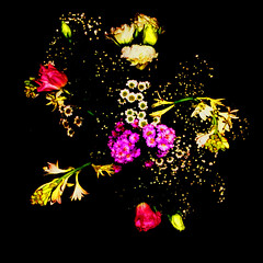 Sem Ttulo (flores) (TenerifeTenerife) Tags: flowers stilllife flores contrast contraste angelica squared naturezamorta saturacao tenerifetenerife danieljacobino