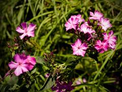 Flowers (Alexey Subbotin) Tags: nikon kodak nikkor dcs фотограф slrn