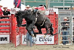 Ride the Dancer...2 (auntiekelliephotography) Tags: horse black pool bareback 21 may riding rodeo cloverdale bronc bucking 2016