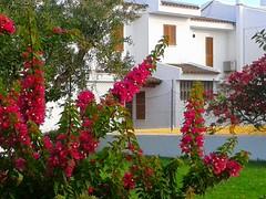 Cala Millor (rbjag71) Tags: flower calamillor mallorca red