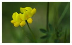 finally yellow (e27182818284) Tags: schwarzwald blackforest smcpk55mmf18