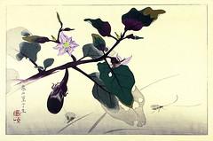 Eggplant (Japanese Flower and Bird Art) Tags: flower eggplant solanum melongena solanaceae rakusan tsuchiya nihonga woodblock print japan japanese art readercollection