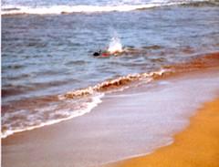 Bert Snorkeling and Splashing - c1983 (kimstrezz) Tags: 1983 familytriptohawaiic1983 hanaleibay kauai bert