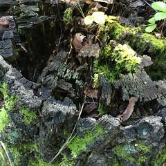 Forest (ekaterinakomarova) Tags: moss forest wood green nature texture