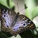 Butterfly 182