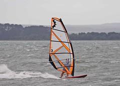 Aug20190a (Mike Millard) Tags: hamworthypark pooleharbour windsurfers