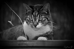 deep in thought... (martinap.1) Tags: cat black white schwarz weis bw katze nikon d3300 55200mm