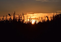 Sunset (careth@2012) Tags: sunset landscape silhouette nature leaves britishcolumbia dusk scene scenery scenic view