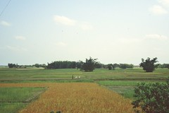 thakurgaon079 (Vonkenna) Tags: bangladesh thakurgaon seismicexploration scenery fertile grain