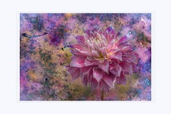 When the passion burns out (Krasne oci) Tags: flower dahlia flowerart nature artistic evabartos original texturedphoto textured photographicart artphoto painterly whenthepassionburnsout canon macro flickr